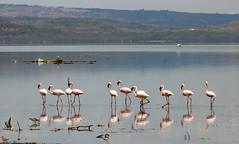 Kenya, Safari (Ninara31) Tags: kenya safari wildlife wildanimal africa bird africanbird