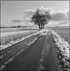 somewhere between here and there (steve-jack) Tags: hasselblad 501cm 50mm cfi kodak trix 400 film 120 6x6 medium format snow trees track perceptol epson v500