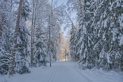 Ski track in a snowy forest (m2onen) Tags: skiing track winter snow crosscountry path white snowy sony a6300 sigma 16mm