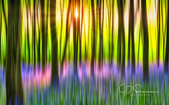 World in Motion - Bluebell Woods (Jon Sargisson - www.jdsargissonphotography.co.uk) Tags: woodland bluebells summer landscape motionblur
