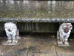 banc-lion© (alexandrarougeron) Tags: photo alexandra rougeron assise urbain ville paris