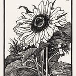Sunflower (1919) by Julie de Graag (1877-1924). Original from The Rijksmuseum. Digitally enhanced by rawpixel. thumbnail