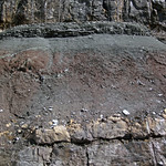 Paleosol (Cave Branch Member, Slade Formation, Upper Mississippian; Clack Mountain Road Outcrop, south of Morehead, Kentucky, USA) 15 thumbnail