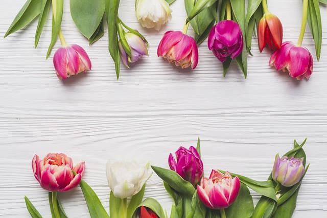 Обои Цветы, Весна, Тюльпаны, Фон картинки на рабочий стол, раздел цветы - скачать