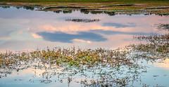 Water surface (Ignacio Ferre) Tags: embalsedesantillana santillanareservoir manzanareselreal madrid españa spain water agua reflejo reflection nikon lago lake