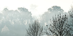 Winter Trees (davidheath01) Tags: green landscape landscapephotography tree trees golf nikon nikond850 abstract greeb photograph photography photographer amateurphotographer amateurphotography silhouette beauty birds nikonflickraward winter wintertrees