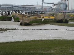 UK - London - Near Rainham - Concrete boats in River Thames (JulesFoto) Tags: uk england northeastlondonramblers london rainham concreteboats riverthames concetebarges rainhammarsh