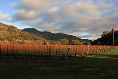 A Shadow Falls Over the Valley (JB by the Sea) Tags: yountville napavalley napa winecountry california december2018 winery vineyard cliffledevineyards