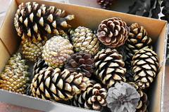 Guardando la Navidad (Micheo) Tags: spain piñas pines doradas golden caja box guardar bye adios navidad christmas