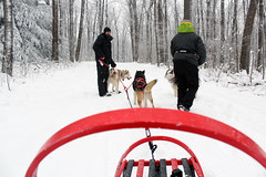 IMG_0028_AutoColor (LifeIsForEnjoying) Tags: snow mushing dog sledding dogs kaskae sitka nike