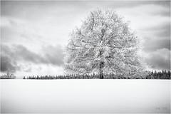 The white Tree... (Ody on the mount) Tags: anlässe bäume em5ii fototour himmel mzuiko1250 omd olympus pflanzen rahmen schnee schneeschuhtour schwäbischealb solitär wald winter wolken bw clouds frame monochrome sw sky trees woods metzingen badenwürttemberg deutschland de