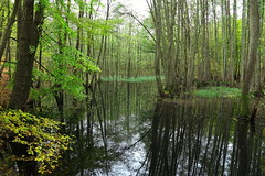 Rückstau (Evan_1980) Tags: uckermark boitzenburg tiergarten strom wald herbst