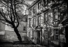 the tree (Daz Smith) Tags: dazsmith fujifilmxt3 xt3 fuji bath city streetphotography citylife thecity urban streets uk monochrome blancoynegro blackandwhite mono tree shadow architecture georgian