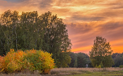 Autumn scene on a meadow (Steppenwolf33) Tags: sunset meadow sky clouds steppenwolf33 grass landscape scrub köpenick berlin stance