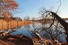 Herbstfoto am See (Urgraphy) Tags: erlangen see lake travel picture photography nature blue sky leaves autumn herbst fall