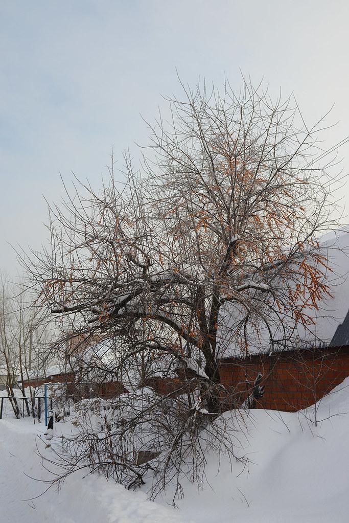 фото: Winter tree