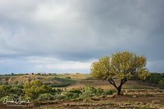 Agrigento Valle dei templi (Claude-Olivier Marti) Tags: europe italie italia italy sicile sicilia sicily valléedestemples valledeitempli agrigento agrigentovalledeitempli nikon