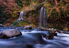 Slightly Alive (Rob Macklin) Tags: robmacklinphotographycom mossbrae falls fall color autumn water river rocks leaves gold red sacramentoriver dunsmuir ca mossbraefalls nikond810 tamron1530lens