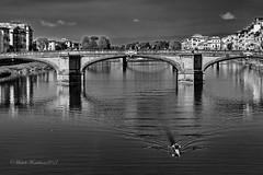 Firenze (Michele Monteleone) Tags: firenze florence fiume arno acqua ponte arco barca cielo biancoenero bw 2017 canon 5dmarkiii michelemonteleone muro pietra albero