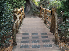 Rustic Wood Bridge over Duck Pond, Tisch Children's Zoo, Central Park, New York City (jag9889) Tags: 2018 20181112 bridge bridges bruecke brücke cp centralpark centralparkzoo crossing footbridge fussgängerbrücke holzbrücke infrastructure landmark manhattan ny nyc nycparks newyork newyorkcity outdoor park pedestrianbridge pond pont ponte puente punt rustic span structure usa unitedstates unitedstatesofamerica water woodenbridge zoo jag9889 tischchildrenszoo