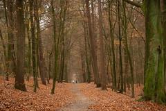 D50_7352.jpg (rvisser_1) Tags: veluwe wood forest herfst