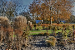 01-Britzer Garten_181116_L- 01 (sigkan) Tags: deutschland berlin britzergarten hdr lumixfz1000