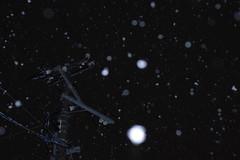 Snow fall (しまむー) Tags: pentax k30 smc fa 43mm f19 limited snow