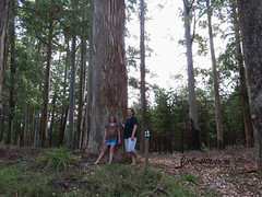 O'connel memorial, Magoebaskloof, Limpopo, Dec 2018 (roelofvdb) Tags: 2018 date december limpopo magoebaskloof place year scenery