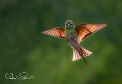 750_1174s (TARIQ HAMEED SULEMANI) Tags: sulemani tariq tourism trekking tariqhameedsulemani winter wildlife wild birds nature nikon
