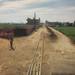 sugar canes farm, Luxor