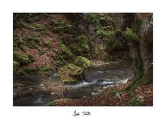 _ATP4733 (anahí tomillo) Tags: nikond7500 sigma1750f28 lightroom paisaje landscape naturaleza nature otoño autunm árbol tree bosque woods