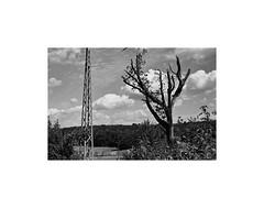 (kotmariusz) Tags: landscape tree pole electricity poland trees woods field clouds analog 35mm filmphotography blackandwhite bw monochrom monochrome monochromatic monochromatyczny ilford xp2400 olympusom40 sky chmury niebo