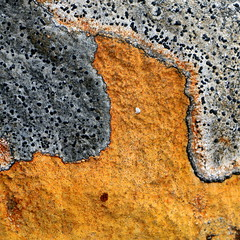 Skófir (hó) Tags: lichen orange grey patterns abstract strútur iceland 2018