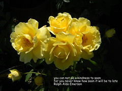 Quote (Dora 913) Tags: quotes roses flowers