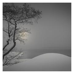 Grey Day (Vesa Pihanurmi) Tags: nature winter snow seascape tree trees grey finland helsinki lauttasaari