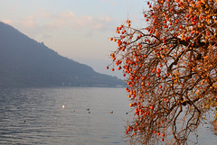 Lago d'Iseo, Italy, December 2018 088 (tango-) Tags: iseo lagoiseo iseolake lagodiseo lombardia italia italien italie italy
