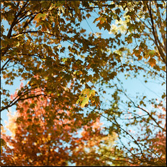 Autumn Intermission (__Daniele__) Tags: hasselblad 500cm analogue analog film expired c41 konica minolta 160 2003 6x6 120 medium format mittelformat square planar 80mm