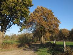IMG_8894 (Momo1435) Tags: eindhoven brabant waalre herfst herfstkleuren netherlands autumn fall colors