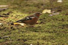 IMG_4691 (monika.carrie) Tags: monikacarrie wildlife scotland seatonpark