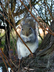 Squirrel Crum-Kins! (Glass Horse 2017) Tags: redcarcleveland redcar park lockepark greysquirrel feeding bread wholemealbreadnibbles duckfood cute sqirrelcrumkins inontheact