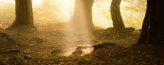 Autumn light (derliebewolf) Tags: natur sunrise wald porschdorf sachsen deutschland de panorama widescreen
