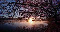 pano_compressed (Foto_Sonnenschein) Tags: branches tree nature morning sunrise wide angle
