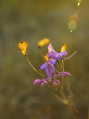 Лучик / Sunbeam (Владимир-61) Tags: осень октябрь природа роща цветы свет луч autumn october nature grove flower light sunbeam sony ilca68 minolta28135 natureinfocusgroup