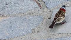 "_Bird (kasiahalka) Tags: argentina argentinalake glacier hotel ice icefield iceberg kostenaikehotel lake losglaciaresnationalpark miradordelossuspiros nationalpark np patagoniadesert patagoniasteppe patagonia lagoargentino southamerica town wate ""santa cruz province"" unesco worldheritagesite"