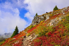 Along the Yellow Aster Butte Trail (AdagioatMSN) Tags: yellow aster butte mount baker wilderness autumn fallcolors hiking mountains
