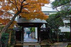 Side gate (tokyobogue) Tags: tokyo japan akabane inetsukejoato 稲付城 inetsukecastleruins nikon nikond7100 d7100 sigma sigma1750mmexdcoshsm castle ruins autumn leaves orange old traditional momiji maple joshoji joshoshrine shrine
