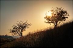 Die Sonne küsst das Herbstgras (linke64) Tags: thüringen deutschland germany gras gegenlicht natur landschaft wiese himmel sonne sonnenuntergang bäume baum herbst hügel