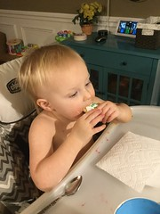"""Dani Eats a Cookie • <a style=""""font-size:0.8em;"""" href=""""http://www.flickr.com/photos/109120354@N07/45712819644/"""" target=""""_blank"""">View on Flickr</a>"""