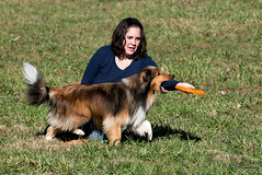 SZP_1313_pslr5 (Lakeside Annie) Tags: 11102018 2018 20181110 24120mm 24120mmf40 70300mm 70300mmf4556 d750 fall huntersville huntersvillenc leannefzaras nc nikkor nikkor24120mmf40 nikkor70300mmf4556 nikkorlens nikon nikond750 northcarolina november10 ruralhill sarazphotography saturday sheepdog sheepherdingtrials dog dogfestival frisbee frisbeedog shepherd trick trickdog