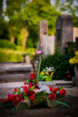 flower in the zagreb cemetery (Sam Scholes) Tags: mirogojcemetery graves zagreb travel landmark graveyard vacation europe cemetery croatia cityofzagreb hr